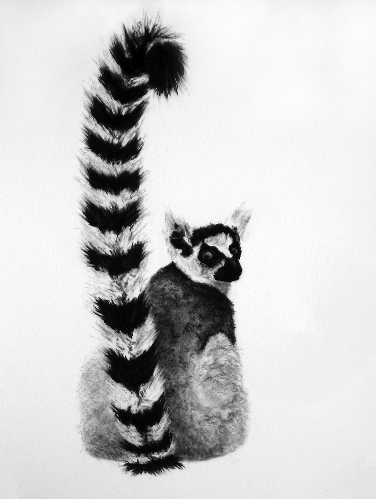 Louisa Jenkinson, Lemur catta, 2009, charcoal and pencil, 38 x 28 cm  Please note that this edition is sold out and this print is not available for purchase.
