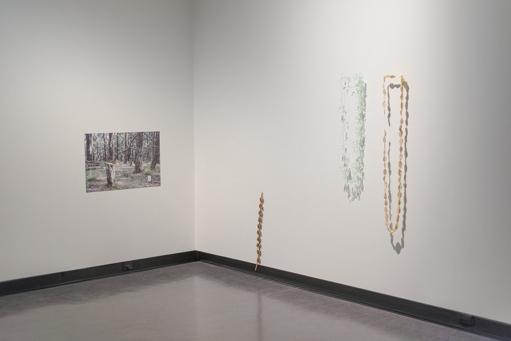 Cara Johnson,  Untitled , 2017, photographic print on cotton rag paper 530mm x 800mm  Cara Johnson,  Support , 2017, blackberry cane, blackberry can pulp, mild steel 640mm x 50mm x 23mm  Cara Johnson,  Tether, 2017,  plastic from a found tree guard, mild steel 1760mm circumference  Cara Johnson , Messmate (Eucalyptus obliqua),  2017, paper, paper thread, natural dye 2520mm circumference