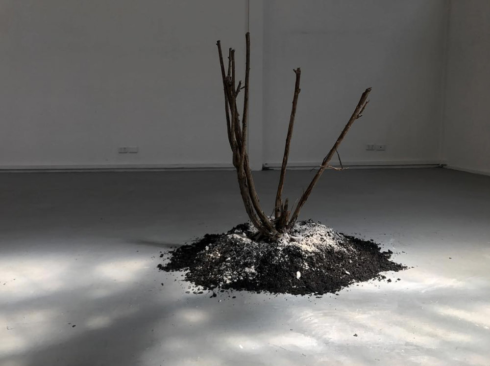 Avan Anwar,  The Value of Bing , 2018, plaster, soil and rose bush. Dimensions variable.