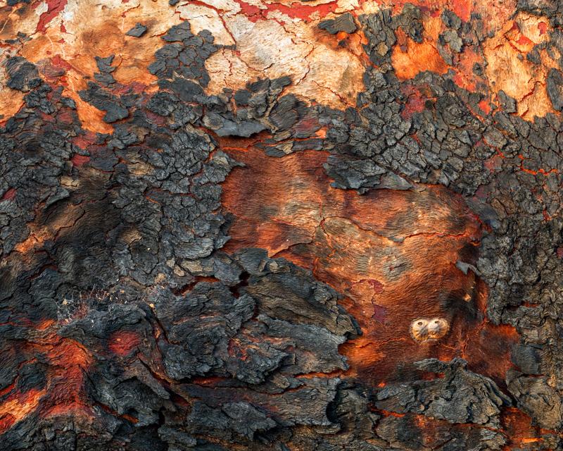 Bark Detail - 14