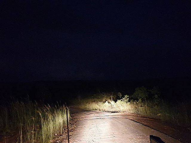 the quiet violence and beauty deafened by the rattle of corrugation,  jostling your bones and loosening the bolts.  in halogen headlights I witness it crossing the road.  away from the river.  #personalproject #documentingprocess #photojournal #behindthescenes #topend