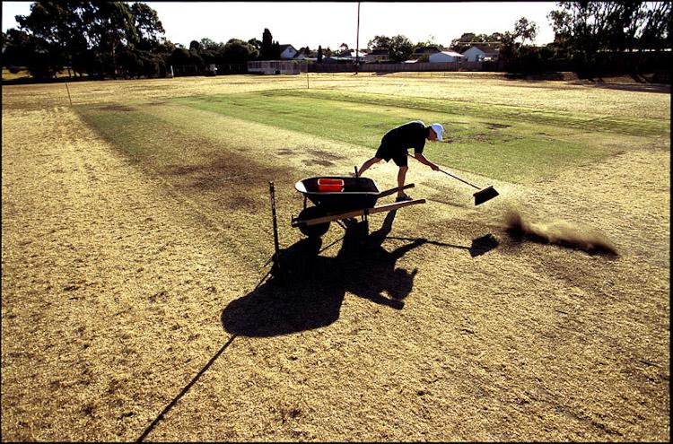 Cricket 1.jpg