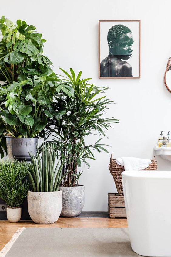Remove Toxins & Improve Air Quality in your Home & Nursery with these Indoor Plants