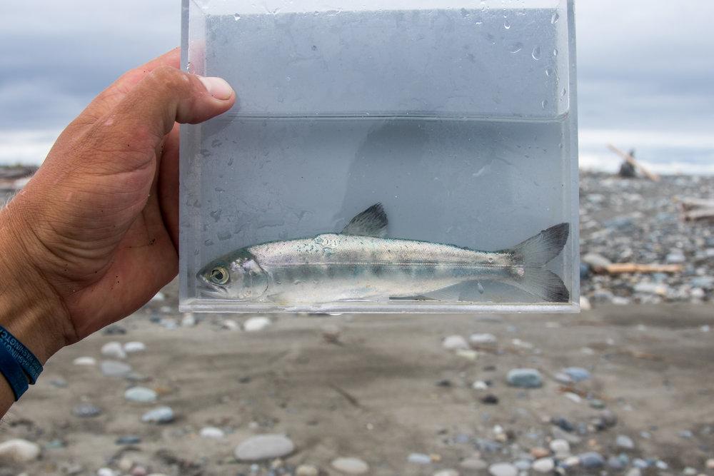 fishing-1-3.jpg