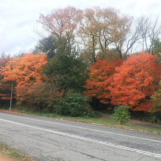 Fall colors in Prospect Park, Brooklyn, NY. #nofilter #fall #autumn #fallcolours #fallcolors #brooklyn #bklyn #nyc #prospect #park #prospectpark #trees #leaves #pretty