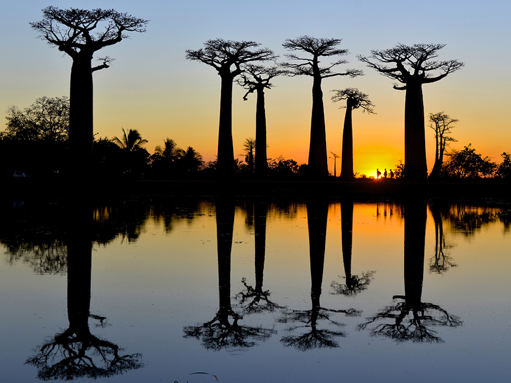 hikers-baobab-trees-madagascar_91080_990x742.jpg