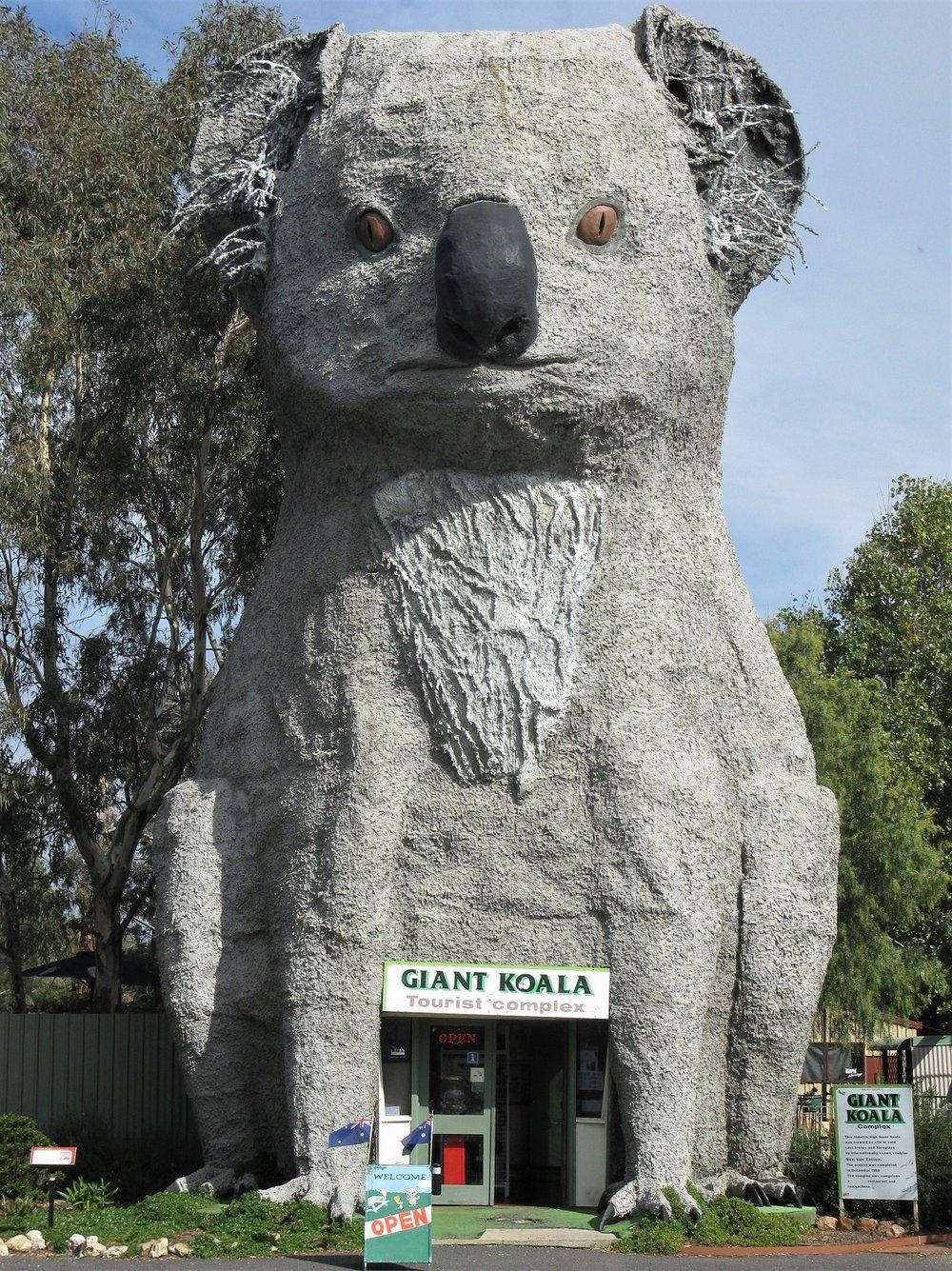 Horsham's Giant Koala