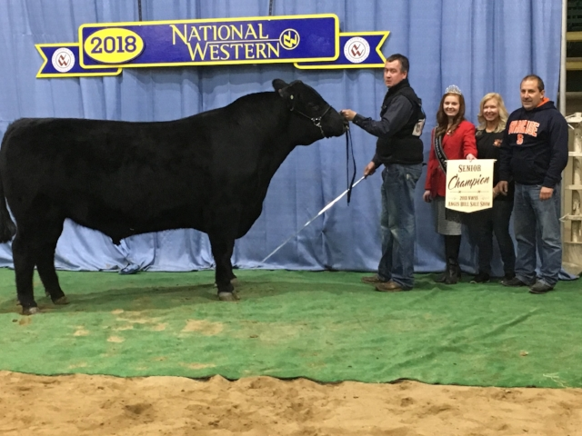 """""""WELYTOK KNIGHT WATCHMAN 5C27"""" SENIOR CHAMPION IN THE 2018 NATIONAL WESTERN ANGUS BULL SHOW IN DENVER, COLORADO. SEMEN IS AVAILABLE ON THIS CALVING EASE SPECIALIST AT ORIGEN IN MONTANA.  AAA # 18099117"""