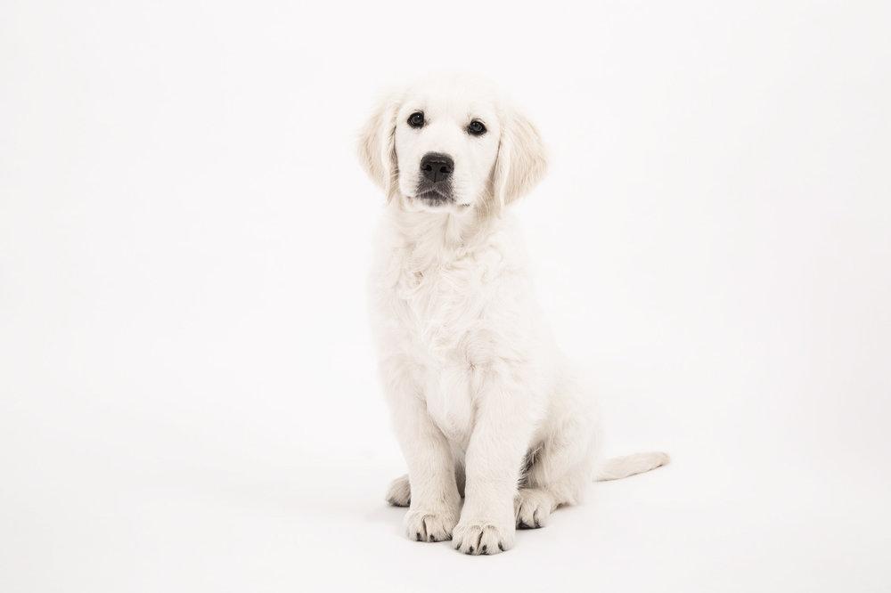 dog-2655472_1920.jpg