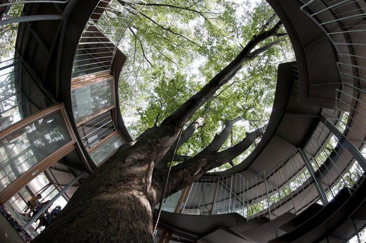 ring-around-a-tree-kindergarten.jpg