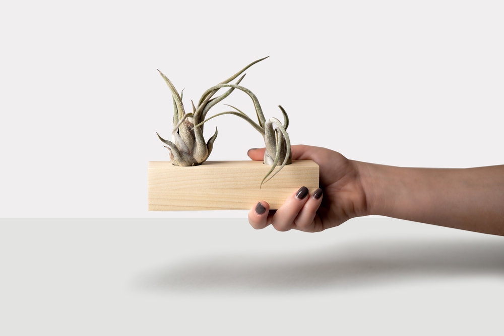 Mini Luxe Wooden Planter by Botanicool