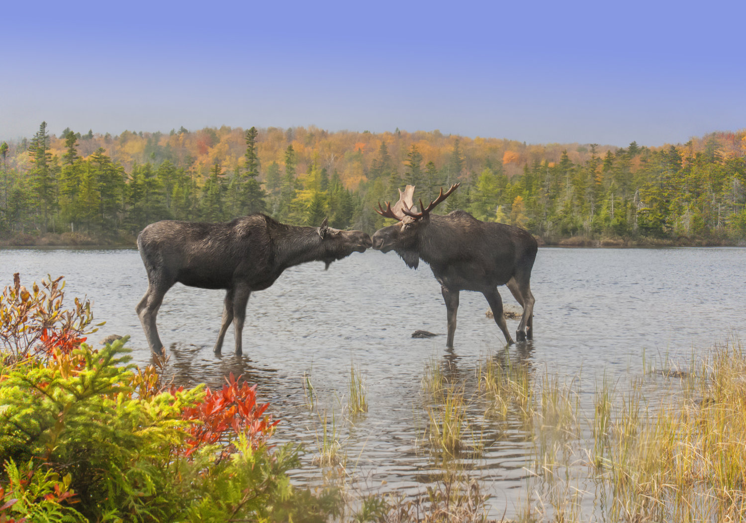 resources for landowners u2014 my maine woods