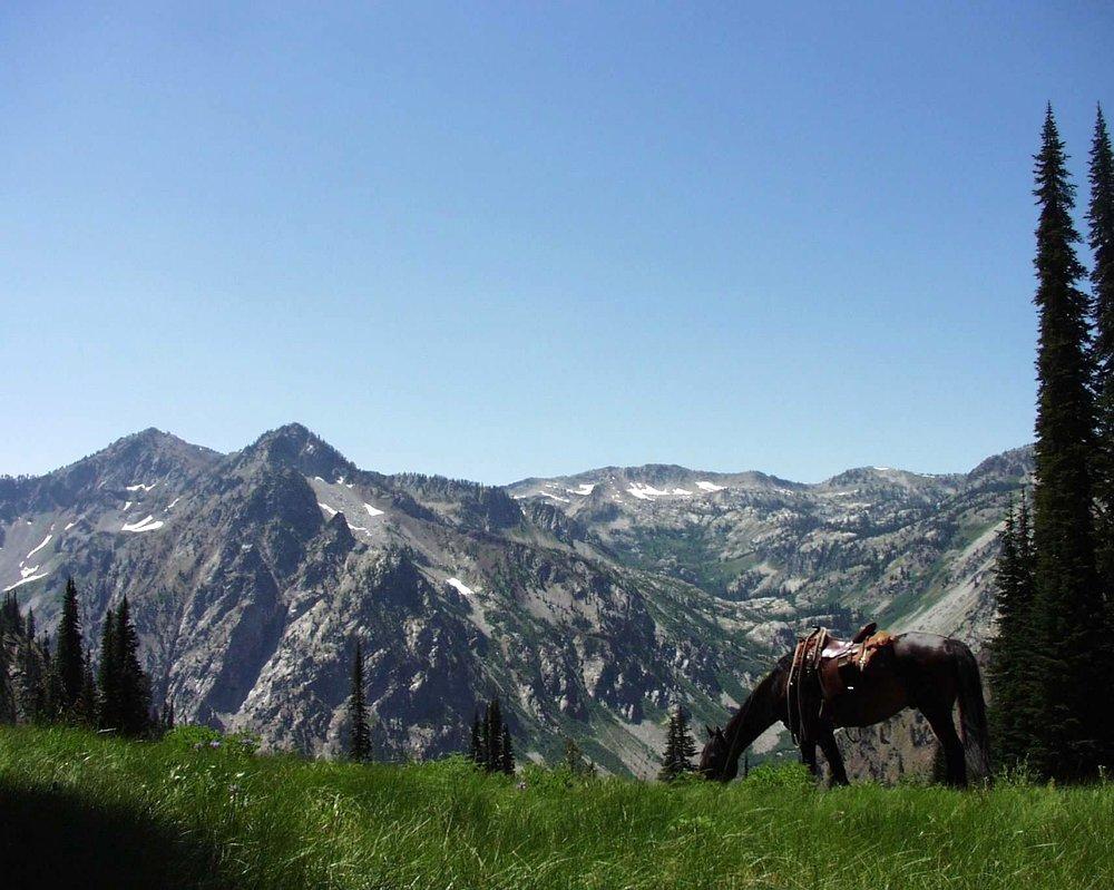 Horse Camp Mtn horse.jpg