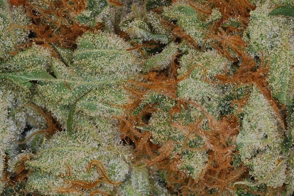 Herijuana close up
