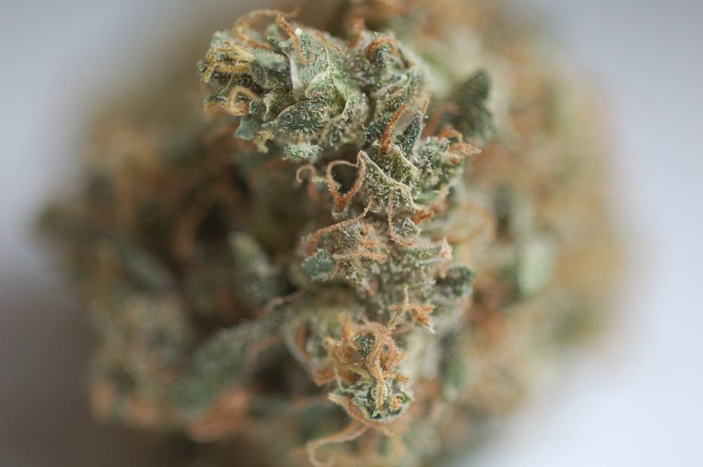 Cannabis bokeh