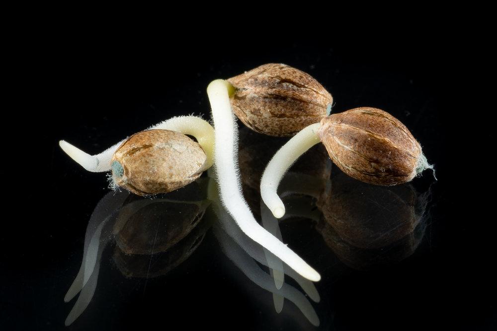 seed-germ.jpg