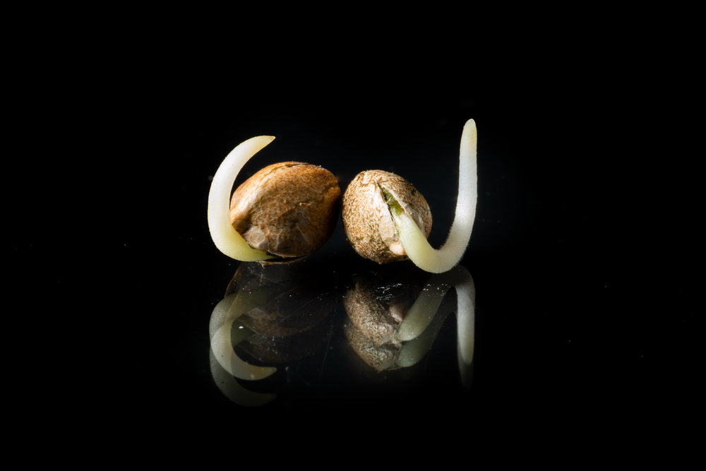 seed-germ-2.jpg