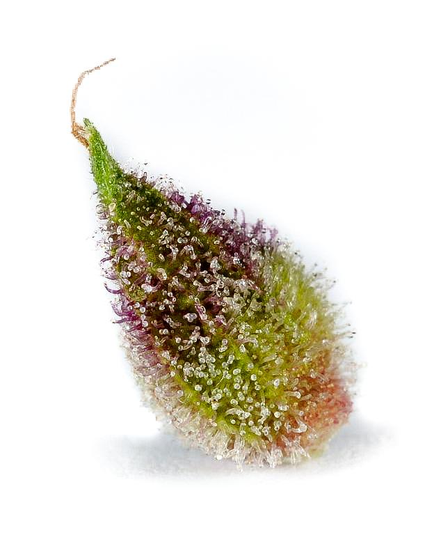 seed-germ-5.jpg