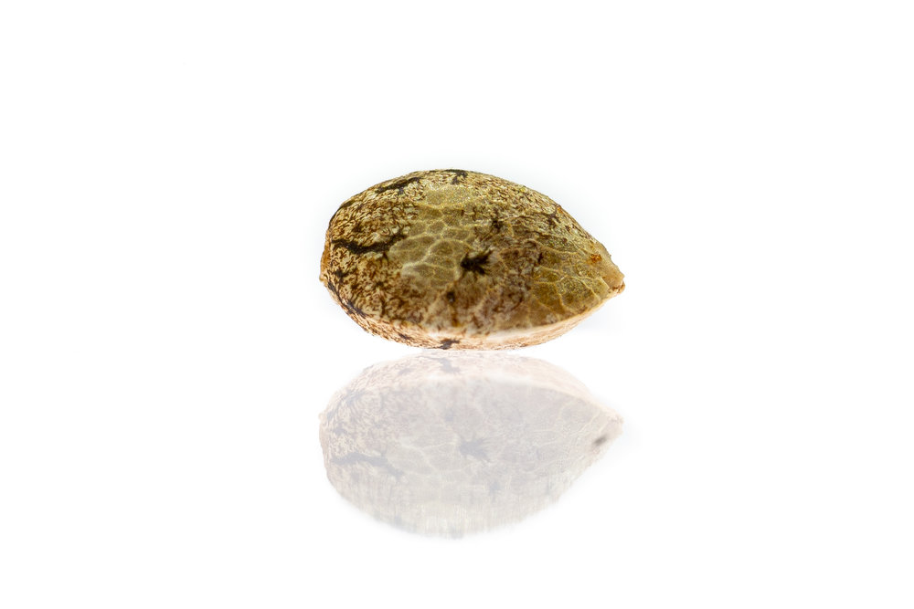 Cannabis seed reflection