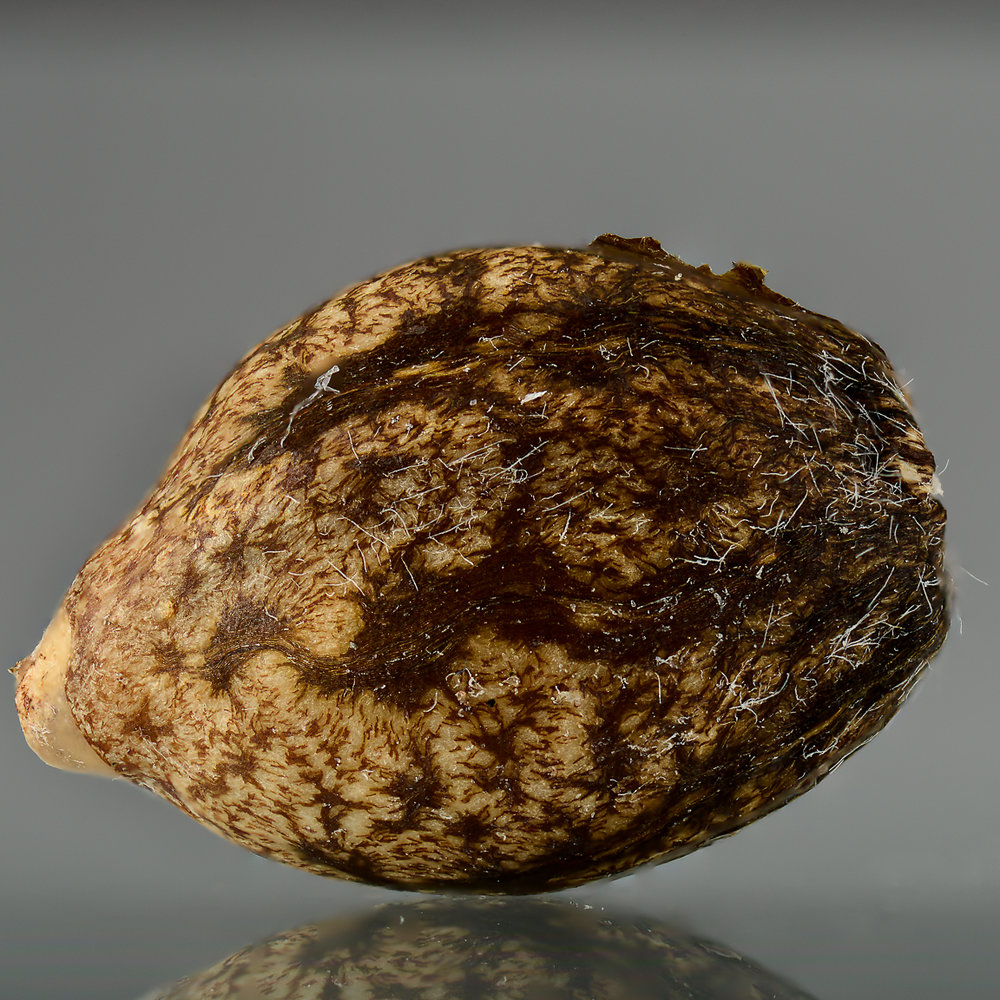 Macro from marijuana seed