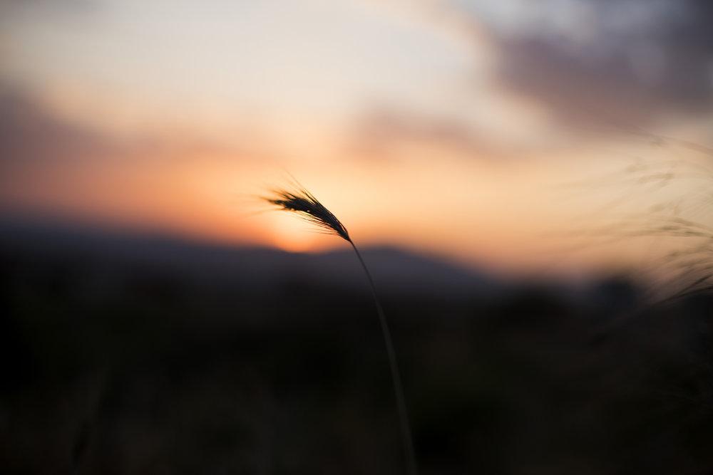 SUNSET_17ABRIL'17.jpg