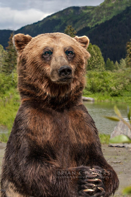 Alaska Wildlife Perserve_078-01.jpg