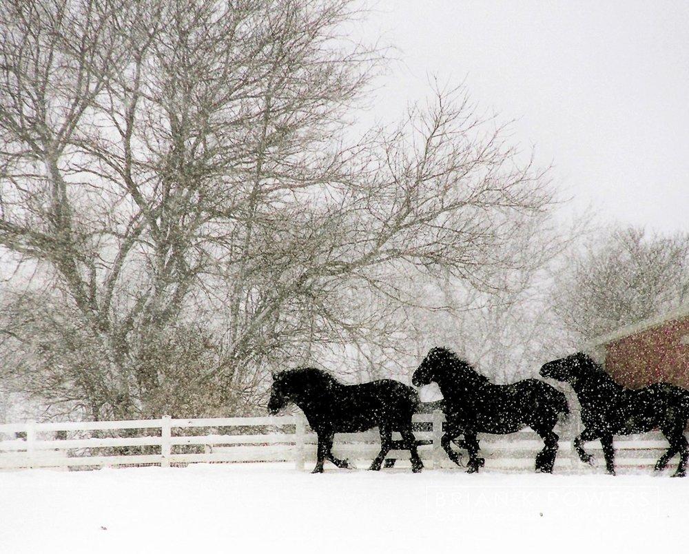 Jonesville_Michigan_horses_in_the_snow_001