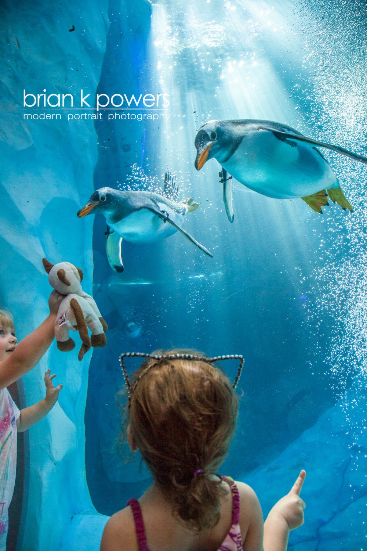 Brian K Powers Photography Penguins Detroit Zoo logo.jpeg