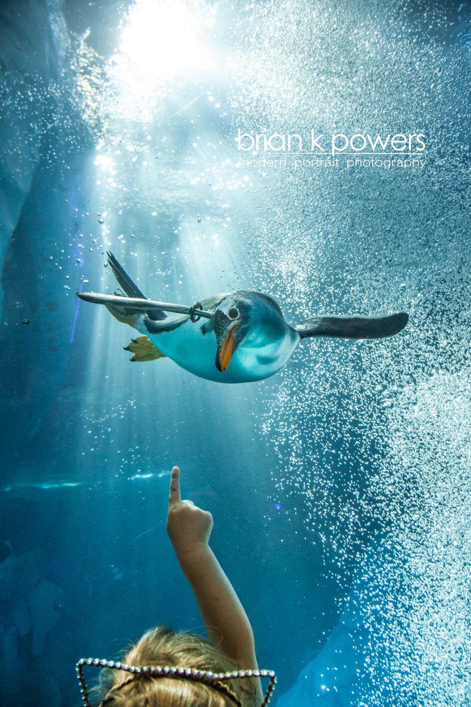 Brian K Powers Photography Penguins Detroit Zoo 001.jpeg