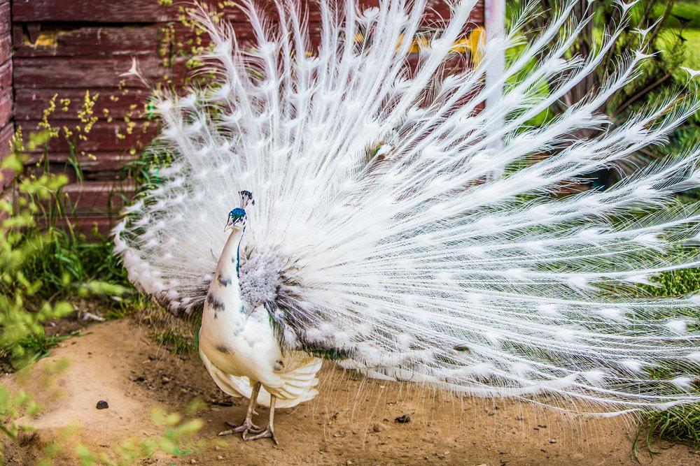 Brian_K_Powers_Photography_Animals_669.jpg