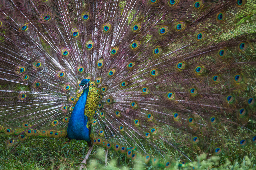 Brian_K_Powers_Photography_Animals_672.jpg