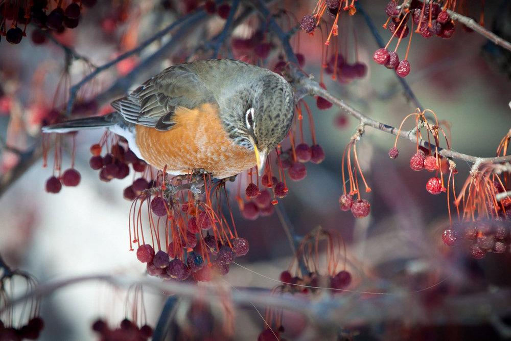 Brian_K_Powers_Photography_Animals_1001.jpg