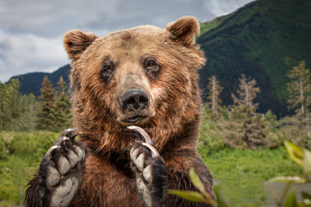 Brian_K_Powers_Photography_Animals_1024.jpg