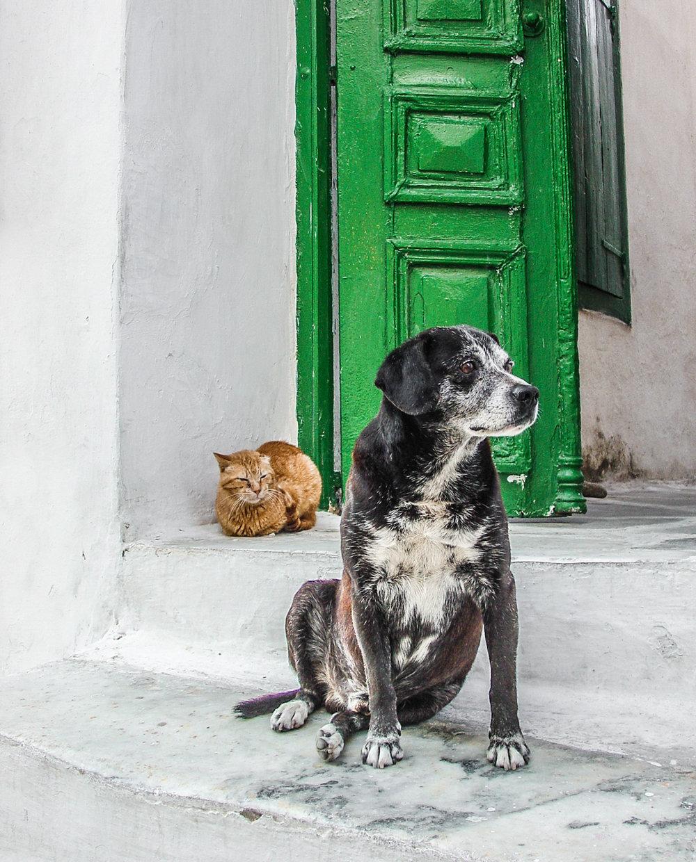 Brian_K_Powers_Photography_Animals_1077.jpg