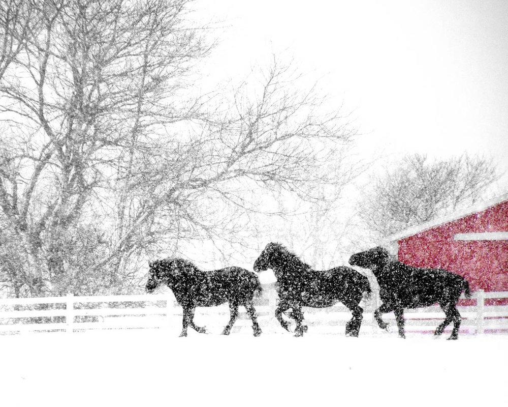 Brian_K_Powers_Photography_Animals_039.jpg