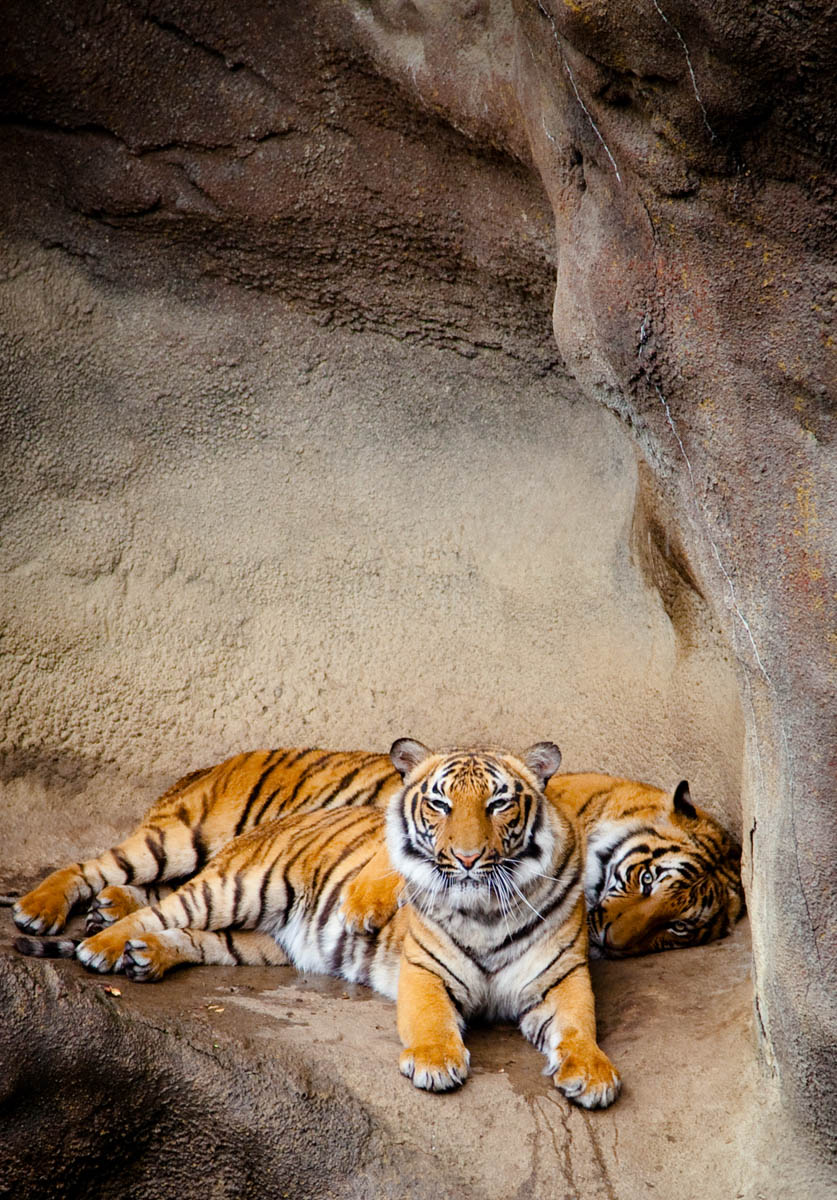 Brian_K_Powers_Photography_Animals_117.jpg