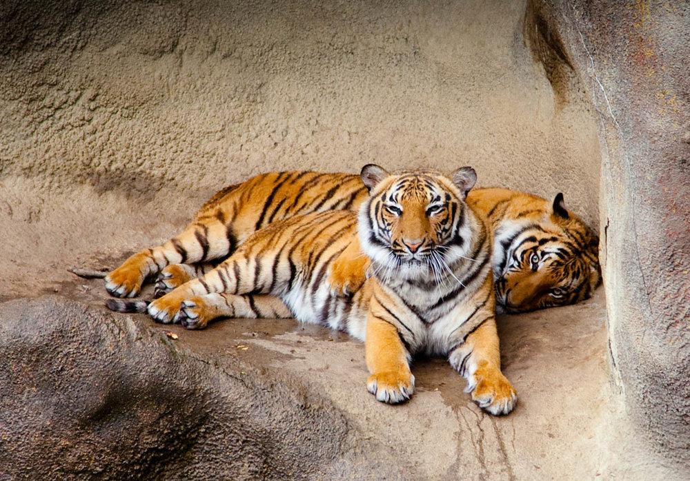 Brian_K_Powers_Photography_Animals_118.jpg