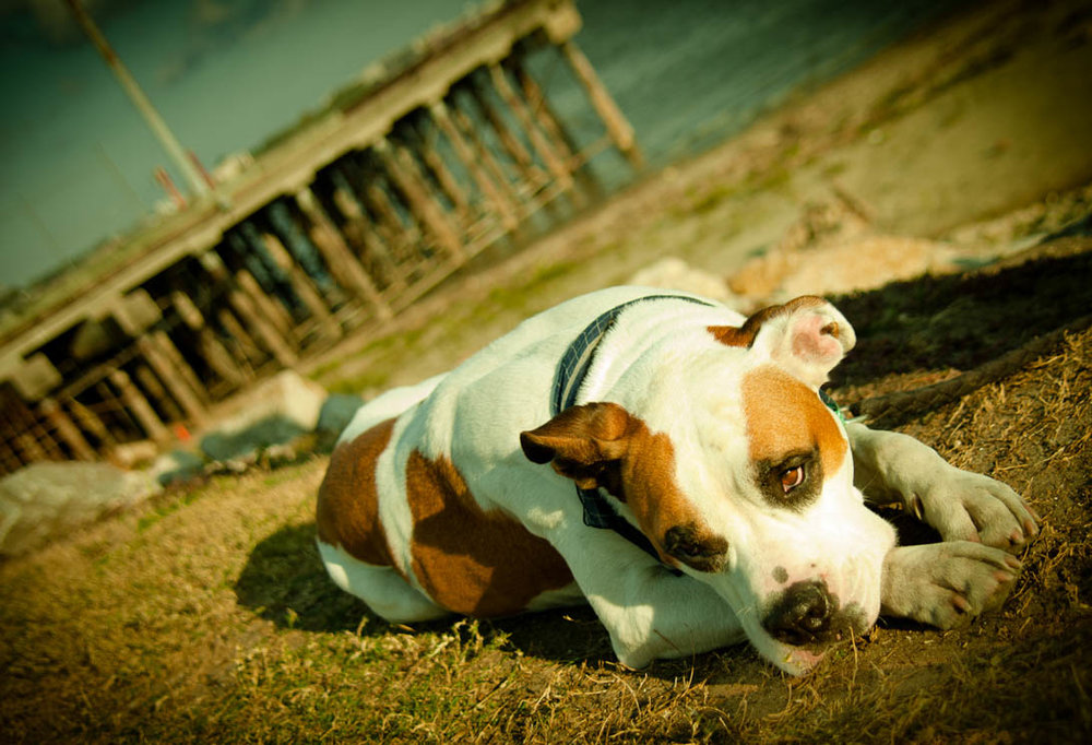 Brian_K_Powers_Photography_Animals_879.jpg