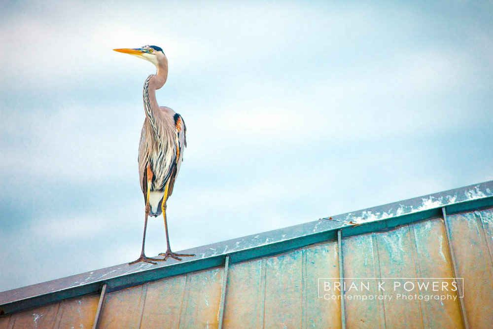 Brian_K_Powers_Photography_Animals_934.jpg