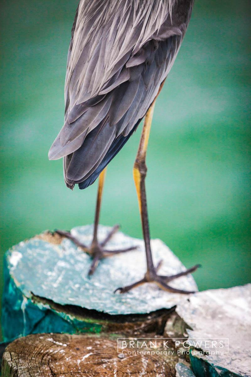 Brian_K_Powers_Photography_Animals_936.jpg