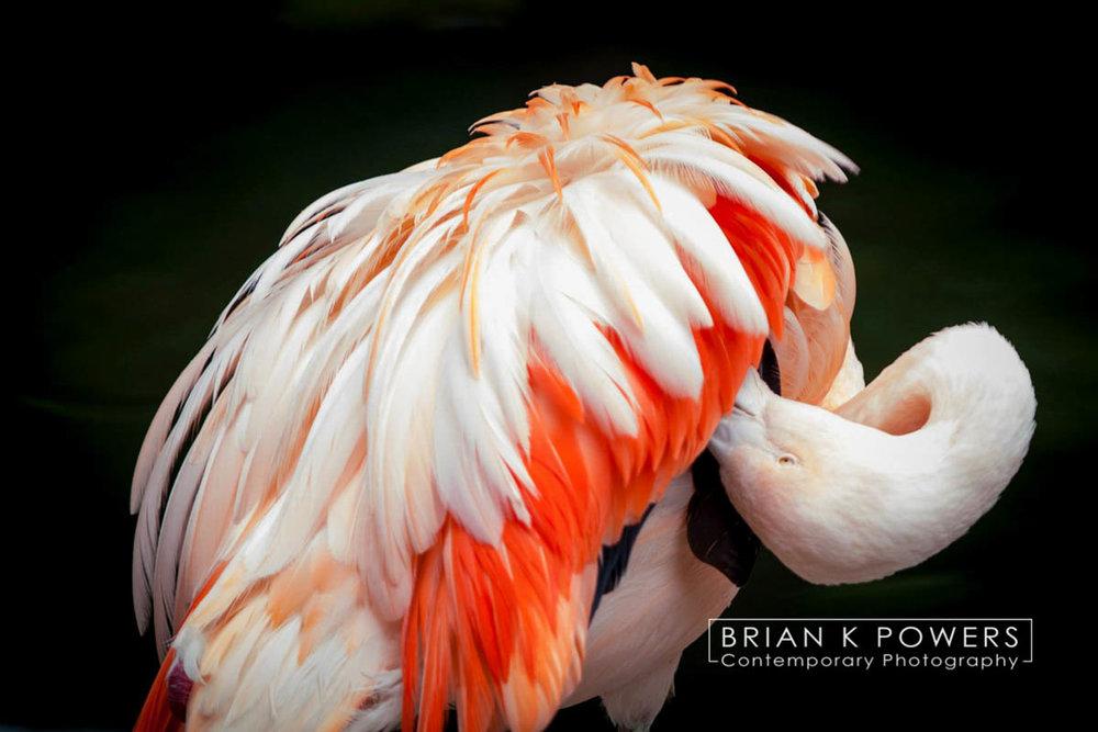 Brian_K_Powers_Photography_Animals_938.jpg