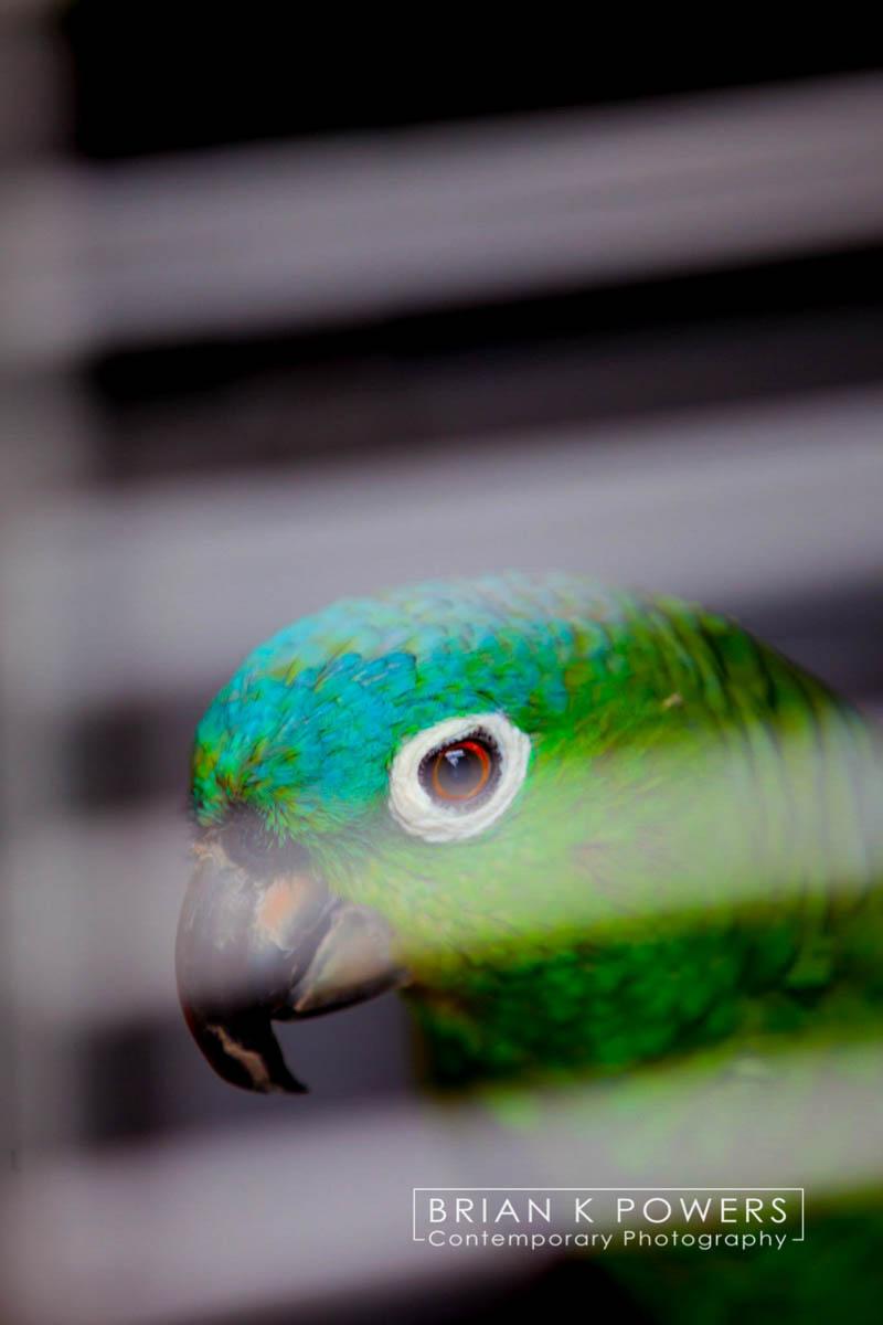 Brian_K_Powers_Photography_Animals_940.jpg