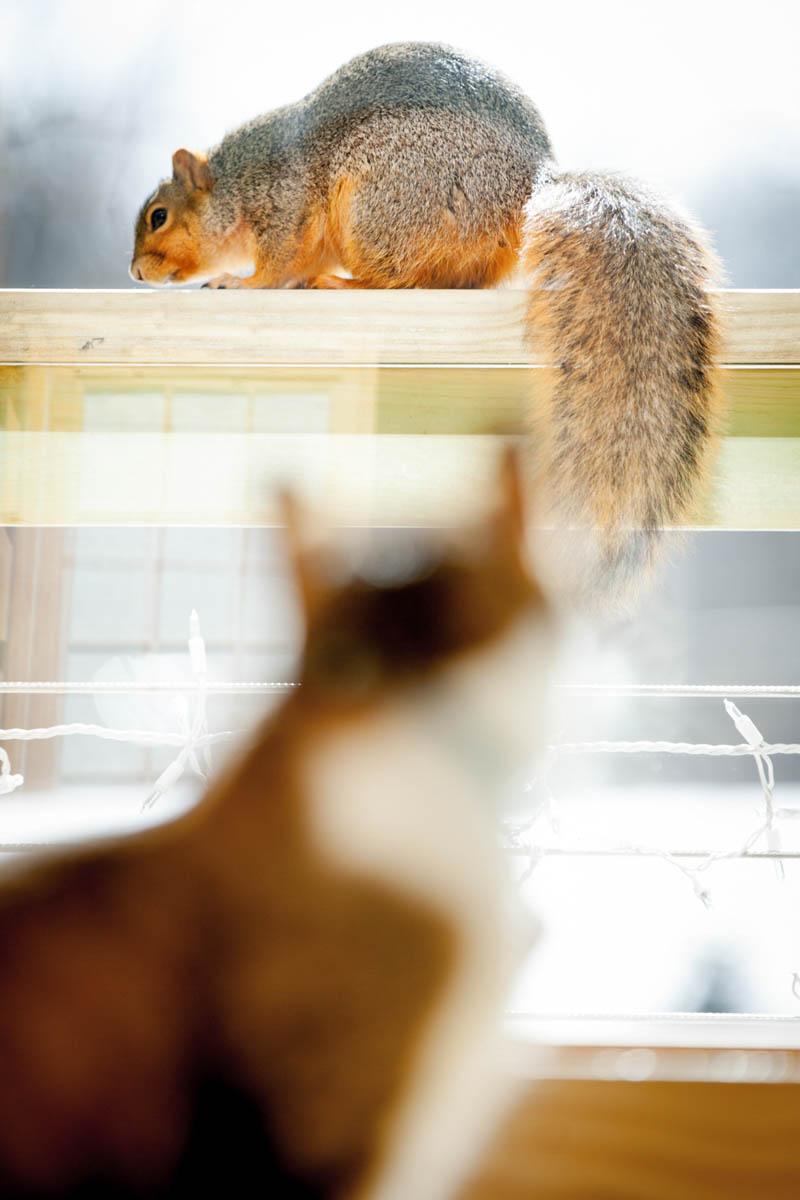 Brian_K_Powers_Photography_Animals_989.jpg