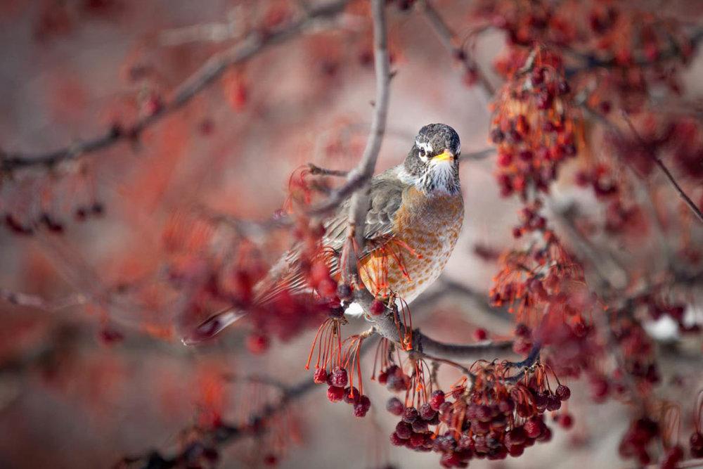 Brian_K_Powers_Photography_Animals_1128.jpg