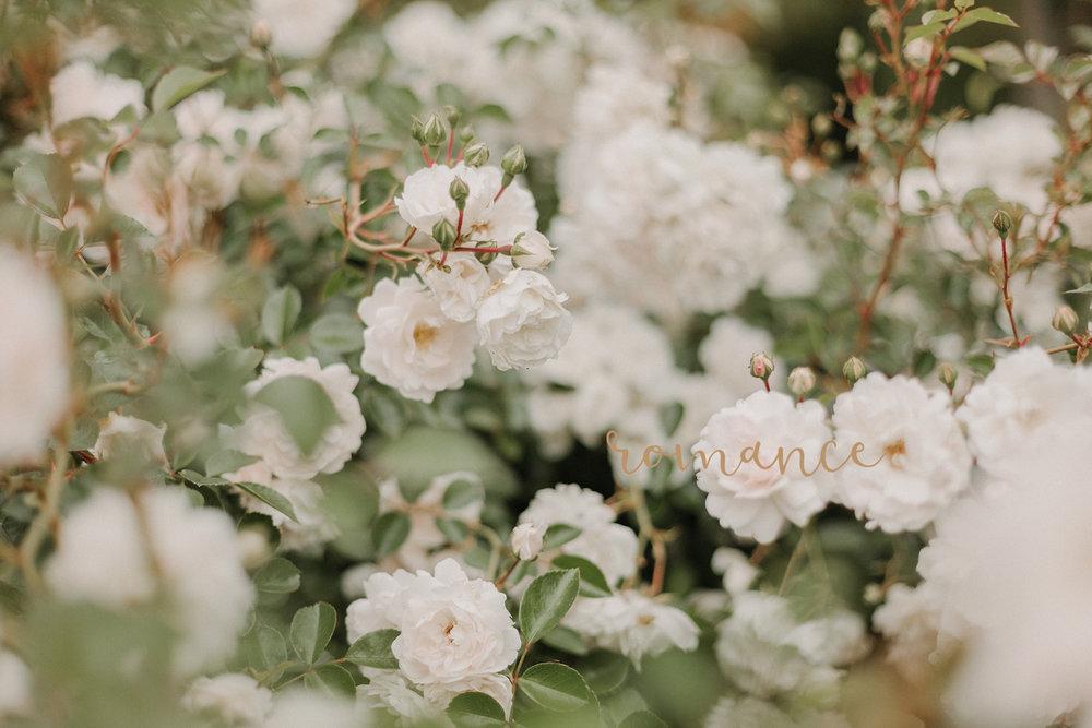 wedding-photography-auckland.jpg