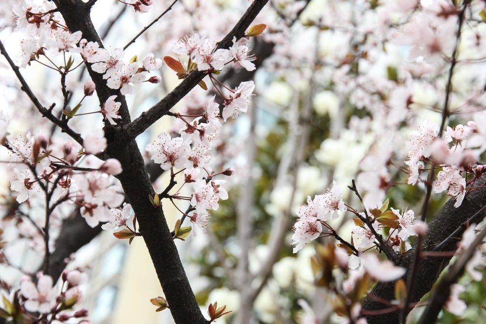 floral-5.jpg