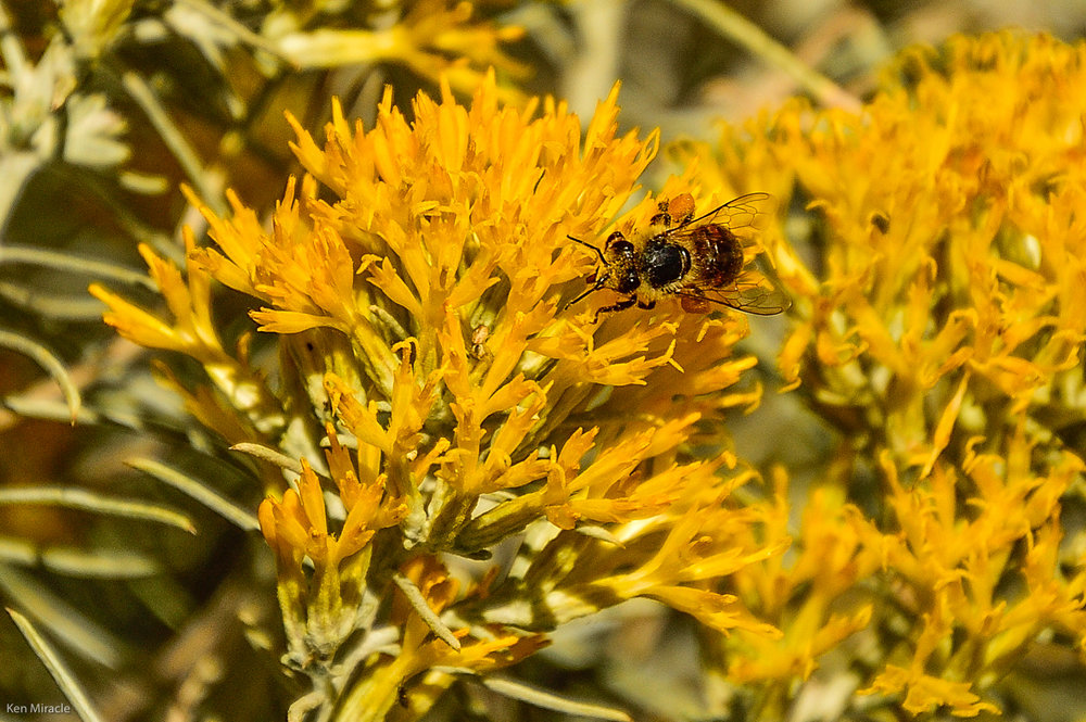 Native plants support healthy populations of insects and pollinators. Photos by Ken Miracle.