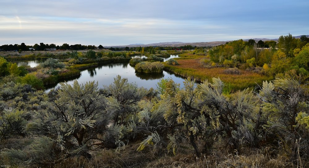 Native basin big sagebrush flourishes on the south hillside. Photo by Ken Miracle.