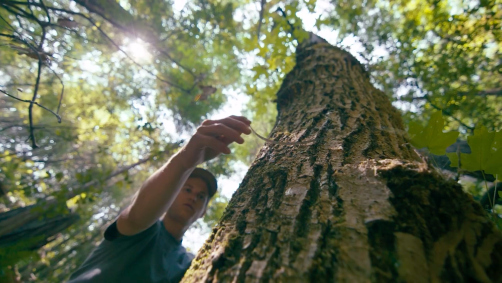 Measuring tree up close.png