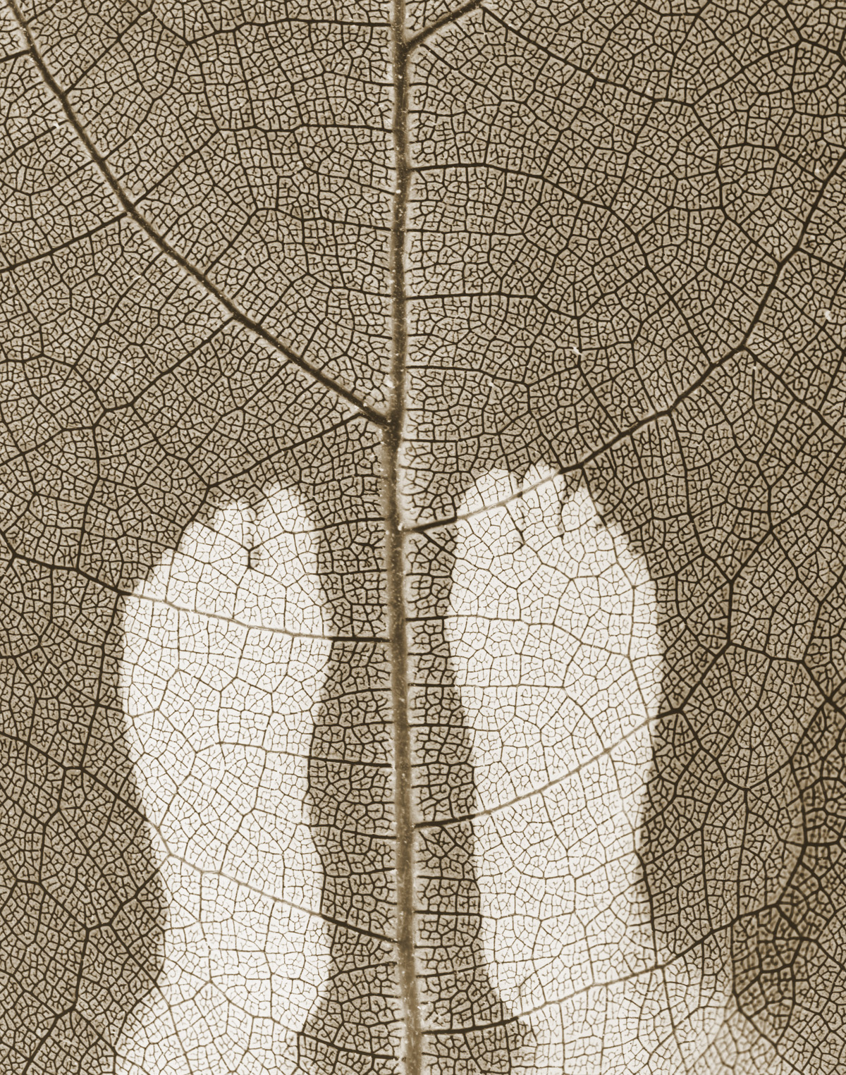 Of This Earth_Feet Leaf